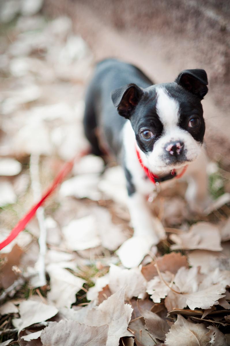 Cutie-Pie Puppy in Leaves