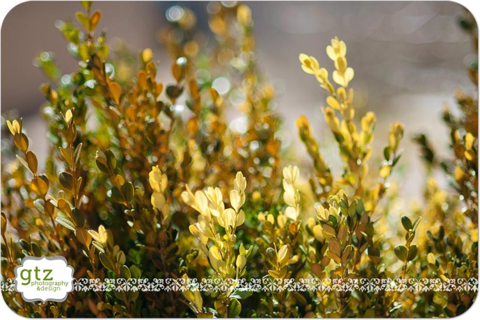 Sun shining through bush leaves makes them glow yellow