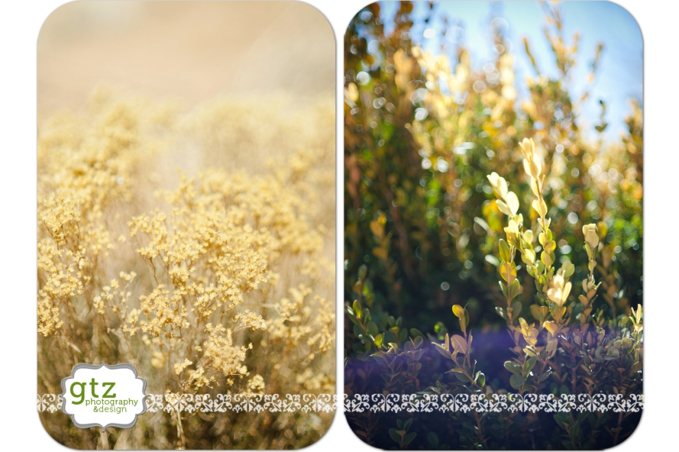 Yellow plant life in Santa Fe, NM