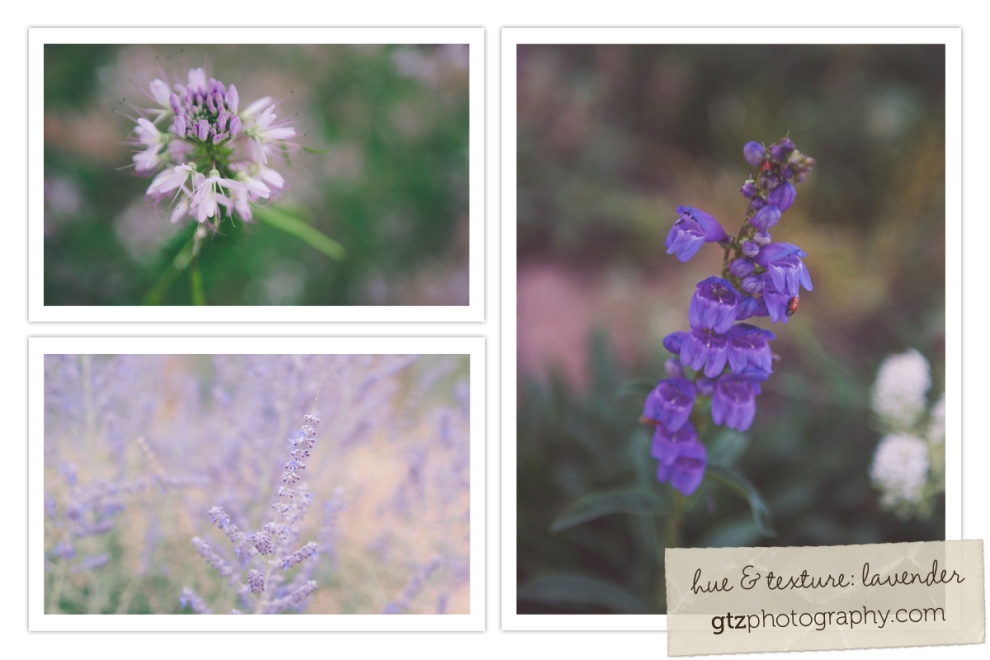 lavender wildflowers collage