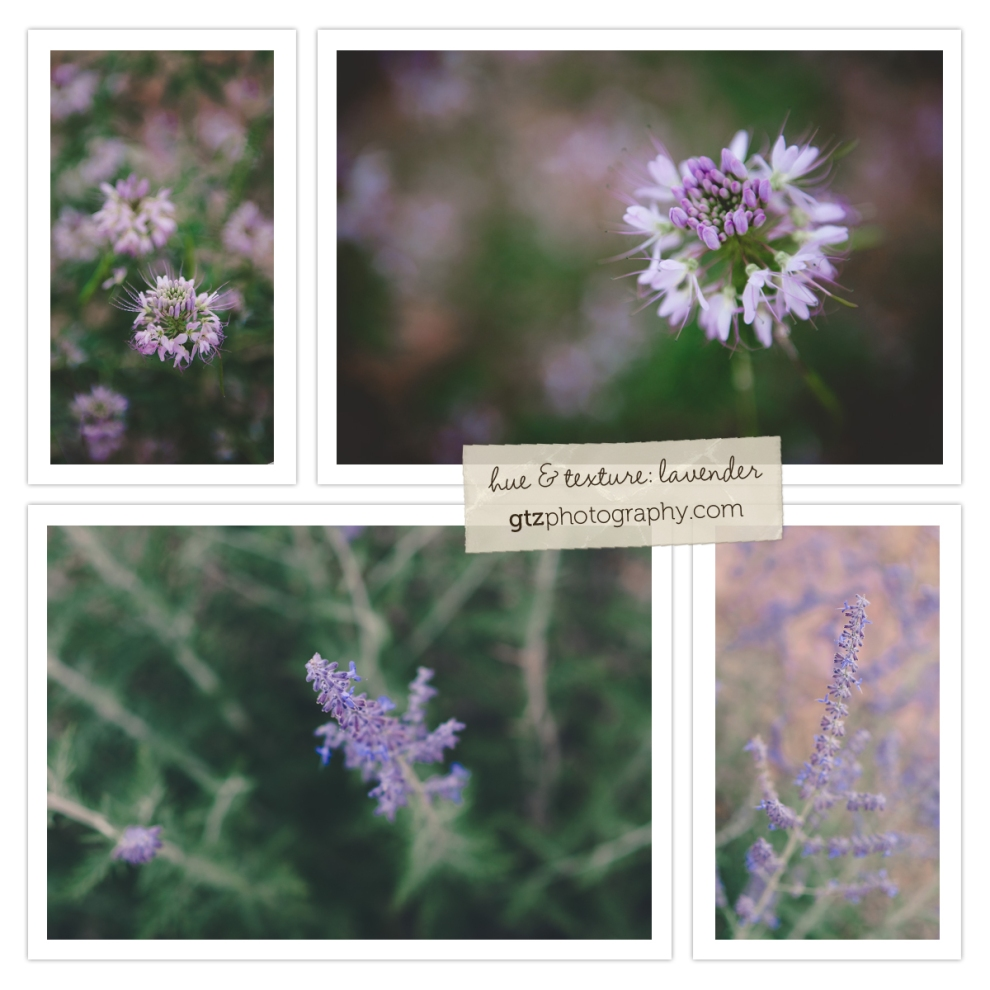 collage of lavender wildlflowers