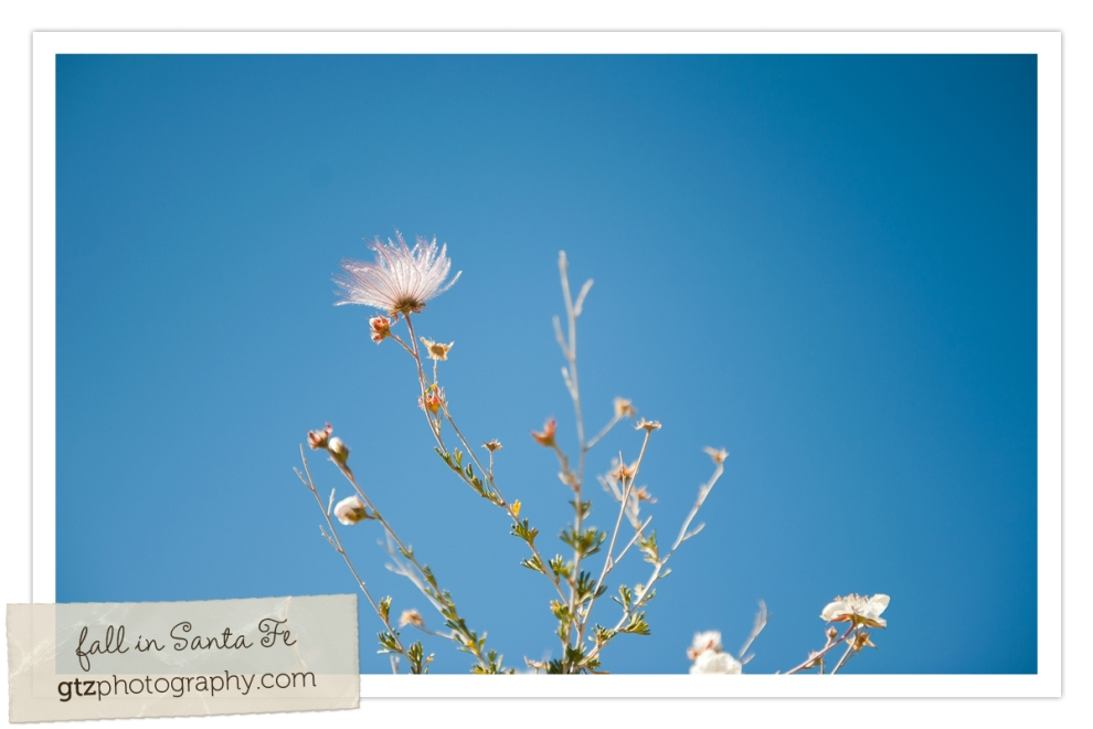 white flower outlined against bright blue sky