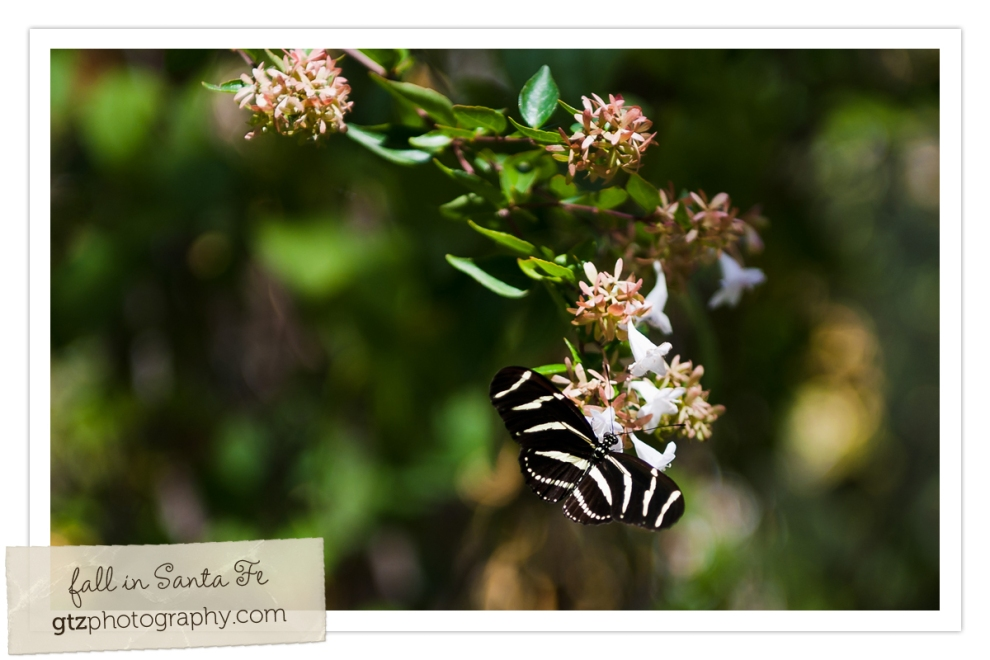 black and white striped butterfly on flowered plant