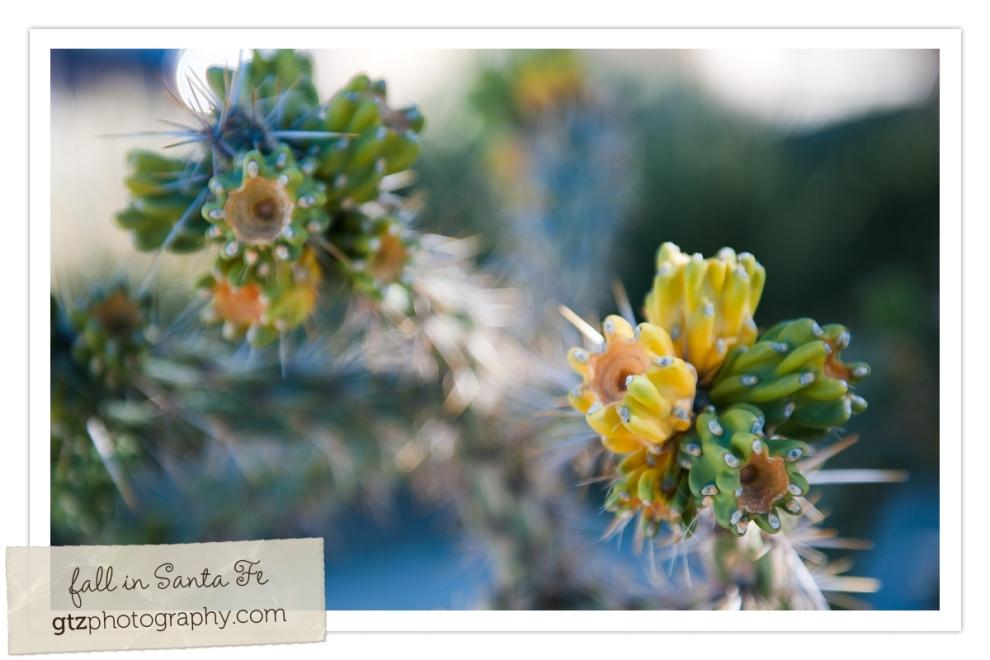 Wild Cactuses!